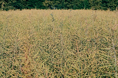 2019.06.23 Leica R5 + Vario Elmar 80-200mm fresh film 04-2020 Fujicolor C200 Lithuania (32) (nefotografas) Tags: 20190623 leicar5 varioelmar80200mm freshfilm 042020 fujicolorc200 lithuania