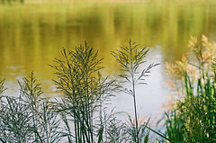 2019.06.23 Leica R5 + Vario Elmar 80-200mm fresh film 04-2020 Fujicolor C200 Lithuania (2) (nefotografas) Tags: 20190623 leicar5 varioelmar80200mm freshfilm 042020 fujicolorc200 lithuania