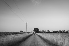 Gravel Road Monochrome (Notley Hawkins) Tags: june httpwwwnotleyhawakinscom notleyhawkinsphotography notley notleyhawkins 10thavenue missouri sky clouds cloudysky land farmland bucolic rural landscape farm farmfield tiltshift horizon callawaycountymissouri 2019 monochrome blackwhite blackandwhite road gravelroad tse50mmf28lmacro