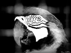 Birds of africa (christianhon268) Tags: birds wildlife theloveforphotographyart art 2019 africa exotic colors bw portrait love beautiful zoo zoom macro flickr wild life christianhon268 photography photographer photo goodphotography phoenix professionalphotography niceday cannon400is canon cannonsx400ispowershot feeding heaven instagram farming facebook
