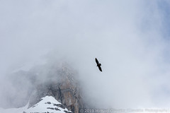 Vulture in the clouds (Ciavatta Photography) Tags: grandtetonnationalpark bird vulture clouds mountains wyoming