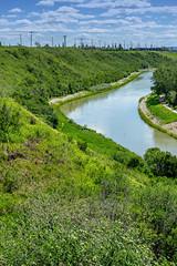 Western Headworks Canal Beside Deerfoot (Bracus Triticum) Tags: western headworks canal beside deerfoot calgary カルガリー アルバータ州 alberta canada カナダ 6月 六月 水無月 rokugatsu minazuki monthofwater 2018 reiwa summer june