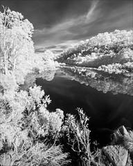 glenaladale-2786-ps-w (pw-pix) Tags: trees sky blackandwhite bw terrain plants water monochrome rock clouds river ir bush rocks rocky sunny hills gorge bushes hilly steep adaptedlens nikkor142428 nikon142428 nikon142428afs sonya7 850nminfrared irconvertedsonya7 nikkor1424mm128ged mitchellrivergorge neartheweirwall justbelowtheweirsite australia victoria infrared peterwilliams eastgippsland mitchellriver mitchellrivernationalpark glenaladale pwpix wwwpwpixstudio pwpixstudio mitchellriverweir glenaladaleweir belowstonycreekcreek belowtheruinsoftheweir