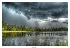 Summer Storm (Pearce Levrais Photography) Tags: storm cloud rain sun summer summertime landscape outside outdoor sony a7r3 pond water reflection plant tree forest reed lilipad dramatic