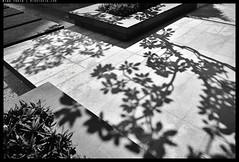 _3503554 copy (mingthein) Tags: thein onn ming photohorologer mingtheincom abstract geometry monochrome bw blackandwhite slanted nikon d3500 afp 1855 f3556 dx vr afp1855