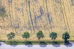 Trees In A Row - 25 (Aerial Photography) Tags: by cha opf 25juni2019 25062019 5sr65379 ackerbau baum baumreihe bavaria bayern blau braun bäume falkenstein farbe feld fotoklausleidorfwwwleidorfde fotoklausleidorfwwwleidorfaerialcom getreidefeld grau grün kornblume landscapeandnature landschaft landschaftnatur landwirtschaft laubbaum luftaufnahme luftbild p2 vgfalkenstein aerial agriculture blue brown color colour cornfield deciduoustree field foliagetree green grey landscape landscapenature leaftree lineoftrees nature outdoor rowoftrees tree trees verde falkensteinlkrcham bayernbavaria deutschlandgermany