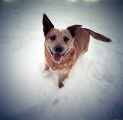 LCA120_052319_6675010 (tracyvmoore) Tags: lomo lomography lomocolor400 square dog odinrogue odin rogue