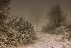 Winter (tom.sk) Tags: winter snow tree illustration season painting background nature dark landscape cold light forest sky art frost scene image snowy