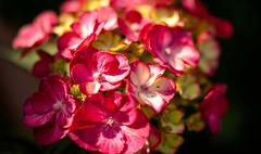 Im Garten V (towytopper) Tags: efm 32mm f14 offenblende blume blüte garten
