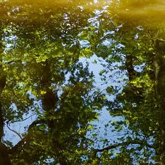 arbres et eau (IMGP2250) (Dnl75) Tags: canal canaldumidi france smcpentaxda70mmf24limited