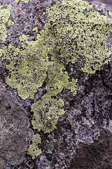 Bushland Textures (Kassy O'Shea) Tags: bush bushland textures tree bark nature wood abstract line