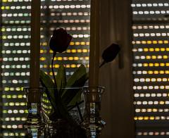 Schutz für die Schnittblumen (Günter Hentschel) Tags: schnittblumen tulpen schatten deutschland germany germania alemania allemagne europa nrw nikond5500 nikon d5500 hentschel flickr dieanderenbilder verrücktebilder juni juni2019 6 2019