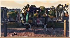 minamikaze190701-1 (minamikaze2010) Tags: furniture decoration summer beach drd icecream cart umbrella summerfest2019 littlebranch palm grass animated sways boardwalk ropefence fourthwall basil landforms floorplan con nomad jian terrier dog thor surfrack image mountain