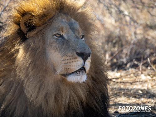 Kevin Richardson Wildlife Sanctuary