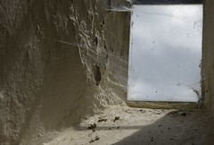 SpiderWaits (Tony Tooth) Tags: nikon d600 nikkor 105mm spider window web cobweb spidersweb shadows mappleton derbyshire