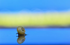 ...escargot... (Anabelle67) Tags: escargot france snail nikonfrance nikonphotographie nikoneurope nikond5300 naturebynikon nikon naturelovers fantasticnature poétique onirique ambience amazing tamron90mmmacro tamroneurope tamronphotography withmytamron tamronfrance tamron90mmf28 tamron 90mm sp90 photography photographie photo photooftheday flickr macroworld macrophoto macrocapture macroofourworld macrophotographie magnifique macroperfection macrodreams macrolover macroinsects macro