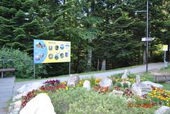 DSC_2612 (Puntin1969) Tags: svizzera ticino domenica giugno estate nikon reflex fiori