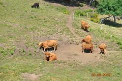 DSC_2590 (Puntin1969) Tags: svizzera ticino domenica giugno estate nikon reflex animali