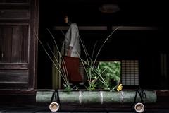東大寺別院阿弥陀寺あじさい祭り 2019 #2ーAmida-ji Temple Hydrangea Festival 2019 #2 (kurumaebi) Tags: yamaguchi 防府市 houfu nikon d750 阿弥陀寺 寺 temple アジサイ hydrangea japan 日本