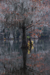 One Ghost (Willie Huang Photo) Tags: bayou baldcypress swamp swamps trees foliage autumn leaves moss southeast mississippi landscape nature scenic colors