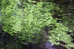 The forest reflection (rozoneill) Tags: mckenzie river national recreation trail bridge deer scott boulder willamette forest belknap springs oregon hiking creek
