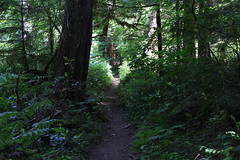 This was definitely a green trail (rozoneill) Tags: mckenzie river national recreation trail bridge deer scott boulder willamette forest belknap springs oregon hiking creek