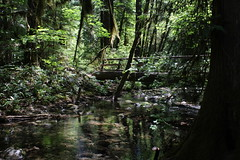 How to beat the heat (rozoneill) Tags: mckenzie river national recreation trail bridge deer scott boulder willamette forest belknap springs oregon hiking creek