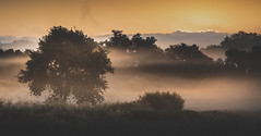 Luou (Noel F.) Tags: sony a7riii a7r iii voigtlander 110 apo teo galiza galicia luou neboa mist fog mencer sunrise carballo oak