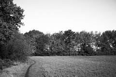 Meebos (Jos Mecklenfeld) Tags: sonya6000 sonyilce6000 sonye30mmf35macro sel30m35 meebos westerwolde niederlande nederland nature natur natuur forest waldbos wald bos spring frühling lente landscape landschaft landschap path pad pfad terapel groningen netherlands hiking wandern wandelen bw monochrome