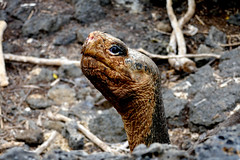 e P1020355 (Simon Caunt) Tags: southamerica lumix hilary equador galápagos leaveonlyfootprints galapagosmarinereserve galapagosarchipelago gadventures lumixtz100