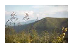 Skyline Drive, 2019 (adamwilliams4405) Tags: canon virginia mountains mountain skyline landscapes landscape spring appalachian appalachia depth va explore outside outdoors tones nature