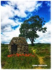 #poppyfields #poppy #poppyflowers #baslow #chatsworth #peakdistrict #peakdistrictphotography #countrywide #derbyshire # #photooftheday #photo #photography #photographer #foto #flowers #flickr (jasmineaskwith1974) Tags: flowers flickr poppyfields poppy poppyflowers baslow chatsworth peakdistrict peakdistrictphotography countrywide derbyshire photooftheday photo photography photographer foto