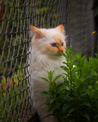 Wow, this plant is growing quickly ! (FocusPocus Photography) Tags: tofu dragon katze kater cat garten garden pflanze animal haustier pet zaun fence plant tier