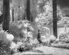 20190628 Infrared View29550-Edit (Laurie2123) Tags: infraredeffect laurie2123 laurieturnerphotography laurieabbotthartphotography 52weeksof2019 blackandwhite monochrome monotone bnw laurietakespics