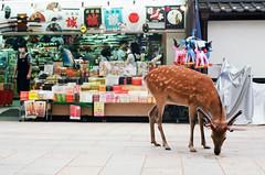 Nara Park (Quinn Milton Photography) Tags: travel film japan analog 35mm canon kodak deer 35mmfilm analogue nara filmphotography filmisnotdead istillshootfilm 35mmfilmphotography