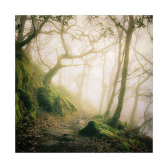 Enveloped (gerainte1) Tags: autumn trees woodland mist colour portra400 film hasselblad501