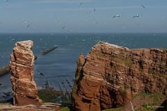 Lange Anna (wernerlohmanns) Tags: wildlife wasservögel natur outdoor nikond7200 d7200 helgoland langeanna hochseeinsel deutschland schleswigholstein insel