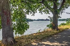Benrath - Am Rheinufer (KL57Foto) Tags: 2019 benrath düsseldorf düsseldorfbenrath fluss germany juni kl57foto nrw nordrheinwestfalen omdem1 olympus rhein rhine sommer river