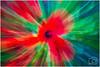 Poppies - 3244