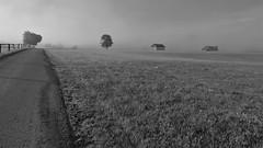 Straßenrand (flori schilcher) Tags: schilcher stadel nebel strase zaun baum
