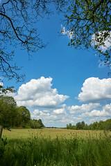 landscape (Jos Mecklenfeld) Tags: forest wald bos nature natur natuur schapenparkodoorn sonya6000 sonyilce6000 sonyepz1650mm selp1650 niederlande landscape landschaft landschap nederland odoorn drenthe netherlands clouds wolken