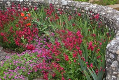 Sunken garden (johnlauper) Tags: follersmanor garden penstemon geranium poppy iris flint