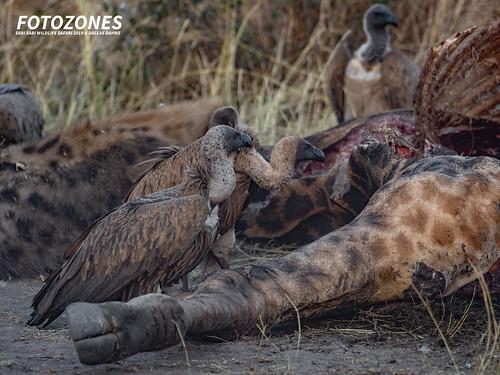 Fotozones Safari 2019