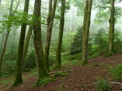 Pagoeta lainupean (eitb.eus) Tags: eitbcom 4512 g1 tiemponaturaleza tiempon2019 monte gipuzkoa aia iñigoigartzaaranzeta