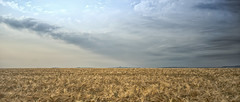 the barley (Redheadwondering) Tags: wiltshire salisburyplain summer landscape sonyα7ii farming fields crops canon40mmf28cheapadapter canon 119picturesin2019 105tipsofthings 105 barley tips ears clouds cloudscape