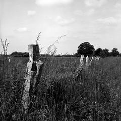 fence (salparadise666) Tags: rolleiflex sl66 planar 80mm fomapan 100 boxspeed caffenol cl monochrome bw black white landscape lower saxony hannover region nature
