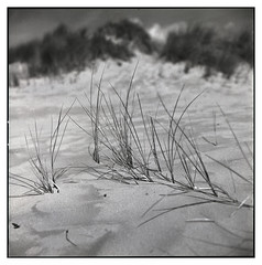 Small contribution (Mark Dries) Tags: markguitarphoto markdries hasselblad500cm planar 80mm28 prism focus 6x6 mediumformat kennemerduinen dunes sand