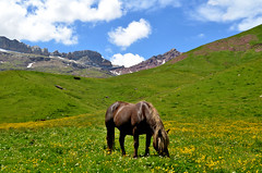 Beharrak (Erre Taele) Tags: pirineos pirinioak pyrenees pyrénées natural park horse caballo zaldi land paisaje landscape animal cheval aragon aragoi huesca mountain montaña mendia green