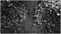 THE GARDEN OF THE GOOD AND EVIL (AEON VON ZARK) Tags: aeonvonzark arts abstract plants garden bienne beauty bw city day detail everyday expressionism freedom fullframe frame fine fatale intimist intense intimacy insolite liberty lights life timeless landscape monochrome natural noiretblanc outdoor openmind oldtown photographie photography photo photographe project photographer retro shooting suisse sun summer structure snapshot trip town thinking texture twisted urban zark