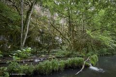 Vallée du Vers 6 (domingo4640) Tags: lot valleeduvers saintmartindevers loxia loxia21 loxia2821 eau riviere levers paysage paysagebuccolique departementdulot tourismelot